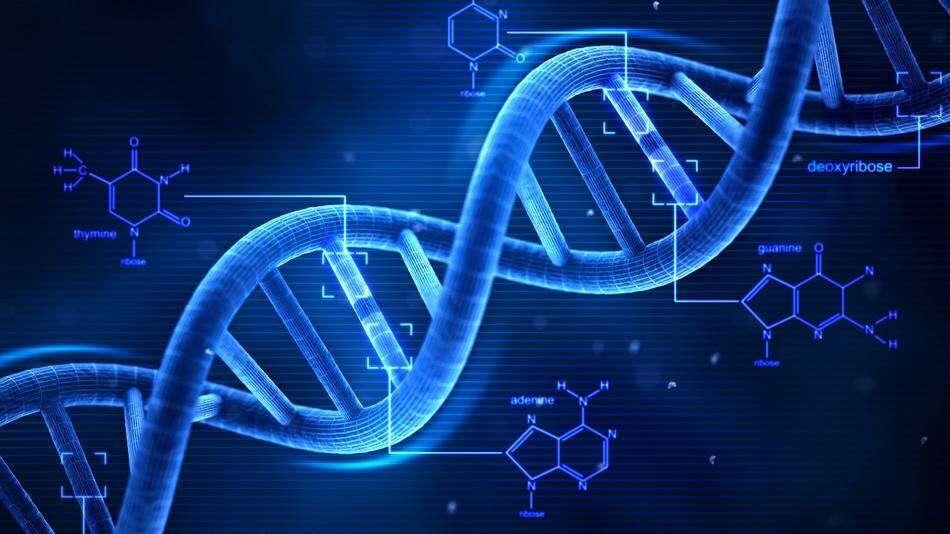 Naukowcy zastępują zasady w DNA innymi związkami