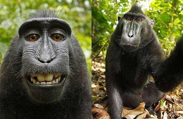 Urzędnicy USA mówią, że właścicielem zdjęcia nie może być małpa