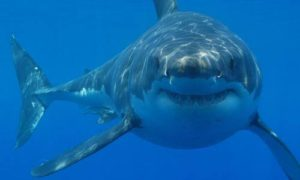 Google musi chronić podwodne kable przed… rekinami!