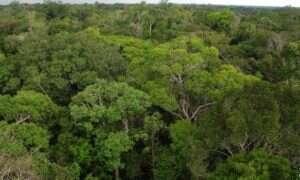 Gigantyczna wieża obserwacyjna w sercu Amazonii