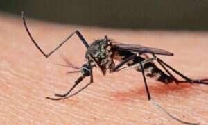 Nowy sposób wykrywania malarii