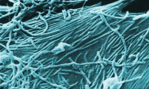 Fałszywe leki na Ebolę