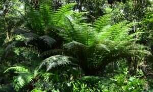 Brazylia odmówiła podpisania umowy dotyczącej ograniczenia wylesiania