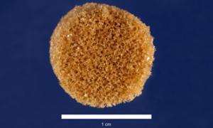 Gąbka, która wypełni luki w kościach