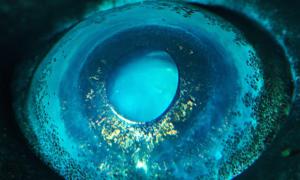 Niesamowite oczy zwierząt w makro powiększeniu