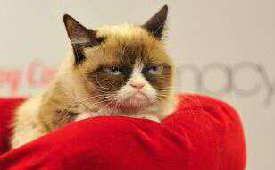 Grumpy-Cat-on-bed-544409