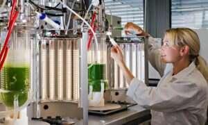 Glony hodowane w laboratorium uratują świat przed głodem?