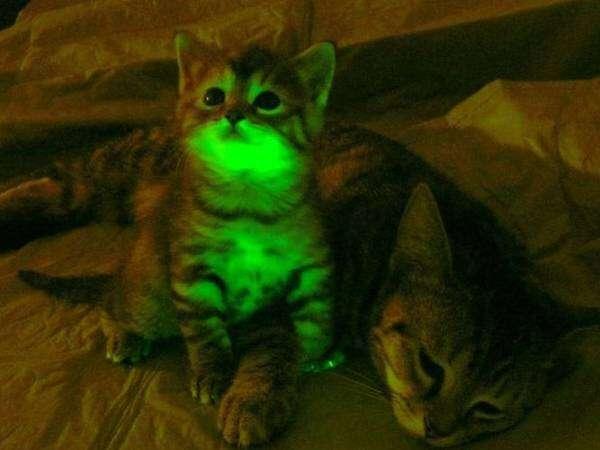 GlowingCats_CREEPY