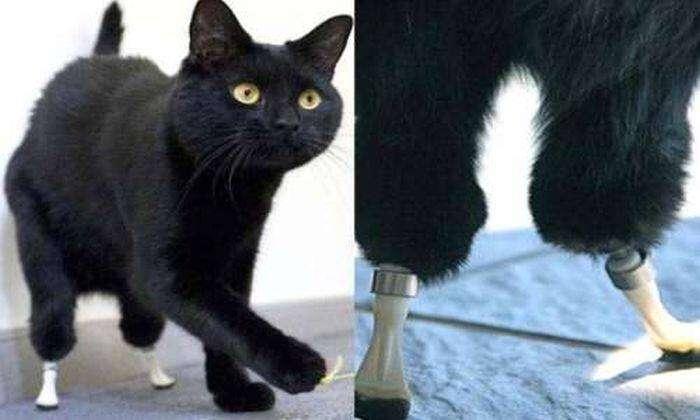 bionic_cat_03