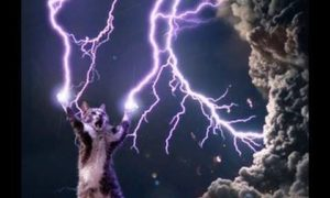 Niesamowite koty z dorobkiem naukowym