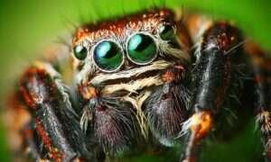 Dlaczego ludzie instynktownie boją się pająków?
