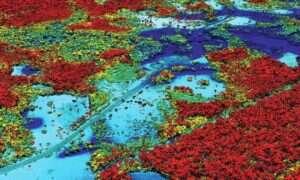 Skanowanie lasów za pomocą lasera pomoże zbadać stan zdrowia roślin