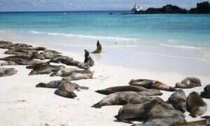 Tajemnicza masa ciepłej wody na Pacyfiku rozregulowuje klimat zachodniego USA