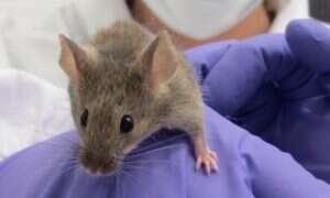 Rzut oka na walkę z rakiem. Jak naprawdę wyglądają laboratoryjne testy na zwierzętach?