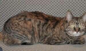 Wysokie tony mogą wywoływać napady drgawek u kotów