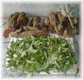 Ayahuasca, narkotyk, zioło, odlot
