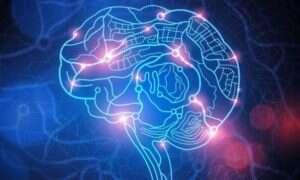 Budowa mózgu szczura przypomina budowę Internetu