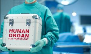 Transplantacja organów i ich ceny na czarnym rynku