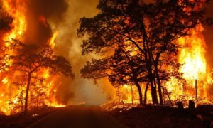 Miliony hektarów lasów stracone w 2013 roku