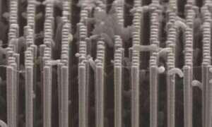 Bakterie są w stanie wyprodukować paliwo z CO2 i energii słonecznej