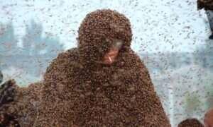 Rekord Guinessa. Strój na który poszło 1.1 miliona pszczół