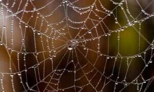 Nasycone grafenem sieci pajęcze wytrzymają impet spadającego samolotu