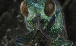 Mini-horror: świat insektów w obiektywie