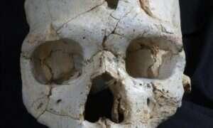 Najstarsze odkryte zabójstwo – czaszka ofiary sprzed 430 tysięcy lat