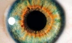 """Naukowcy odkryli """"częściowe obejście"""" problemu ślepoty"""