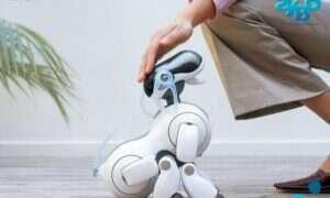 Niegdyś popularne psy-roboty Aibo kończą funkcjonowanie, łamiąc serca właścicieli
