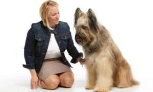 Badania wykazały: Psy dokonują oceny na płaszczyźnie socjalnej i emocjonalnej