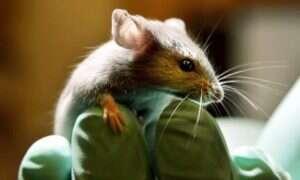 Wynaleziono lek gwałtownie zwiększający regenerację tkanek organizmu