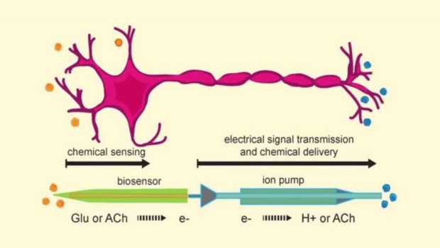 artificial-neuron-communication_Karolinska Institutet