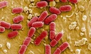 Żyjący obwód elektryczny z bakterii