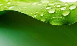 Sztuczne liście wytworzą paliwo przyszłości