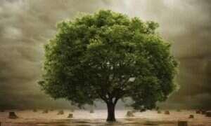 Badania nad ewolucją: Naukowcy stworzyli uniwersalne Drzewo Życia