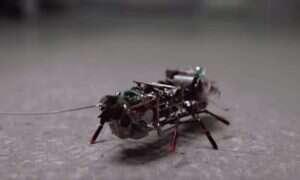 Rosyjski mini-szpieg: robot-karaluch do zakładania pluskiew