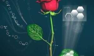 Róża cyborg ze Szwecji