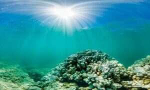 2016 ma być najcieplejszym rokiem – rafy koralowe w niebezpieczeństwie