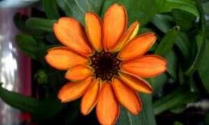 Pierwszy kwiat który zakwitnął w kosmosie