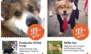 Aplikacja Microsoftu służąca do rozpoznawania psów