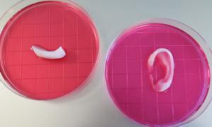 Druk 3D pozwala na budowę ludzkich tkanek