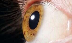 Terapia genowa wzroku już na nas czeka