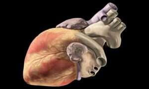 Izraelscy naukowcy stworzyli serce cyborga
