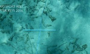 Pierwsze fragmenty rafy koralowej zaczęły bezpowrotnie znikać