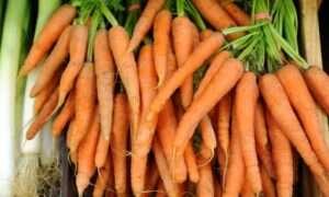 Gen odpowiadający za kolor marchewki