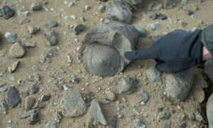 Liczące 71 milionów lat skamieliny odnalezione w Antarktyce