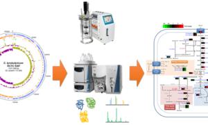 Bakteria, która może pomóc w produkcji biopaliw