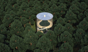 Co powiecie na szklany dom zbudowany wokół drzewa
