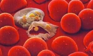 Malaria zniknie dzięki Gatesowi i GMO